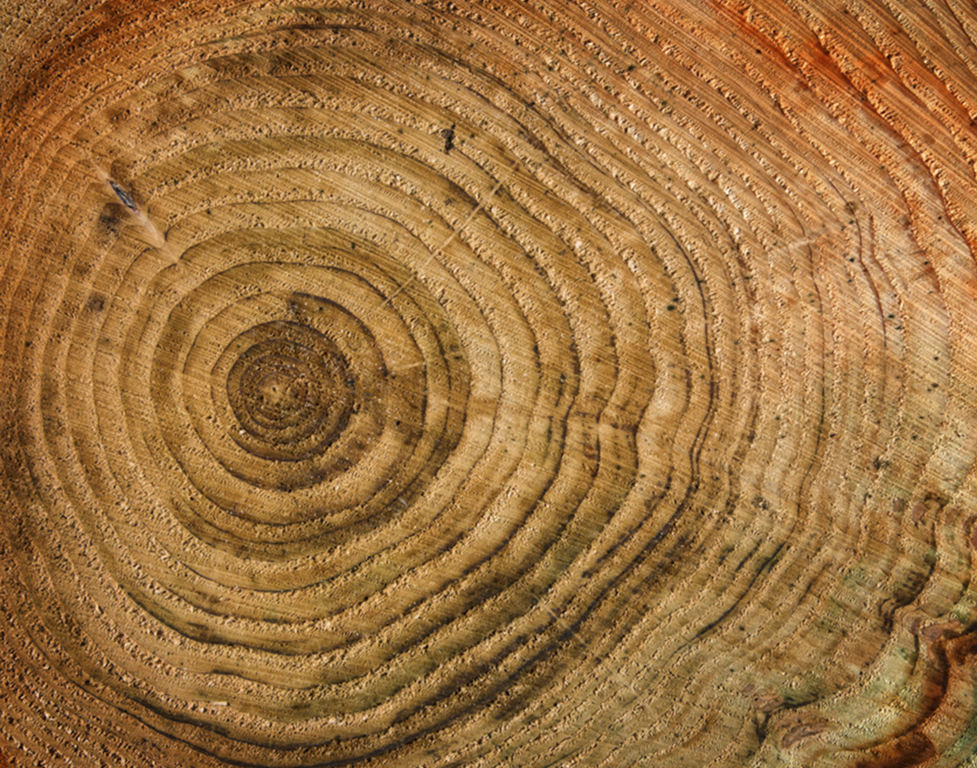 02-depositphotos_2475823-Wooden-background-with-age-circles.jpg